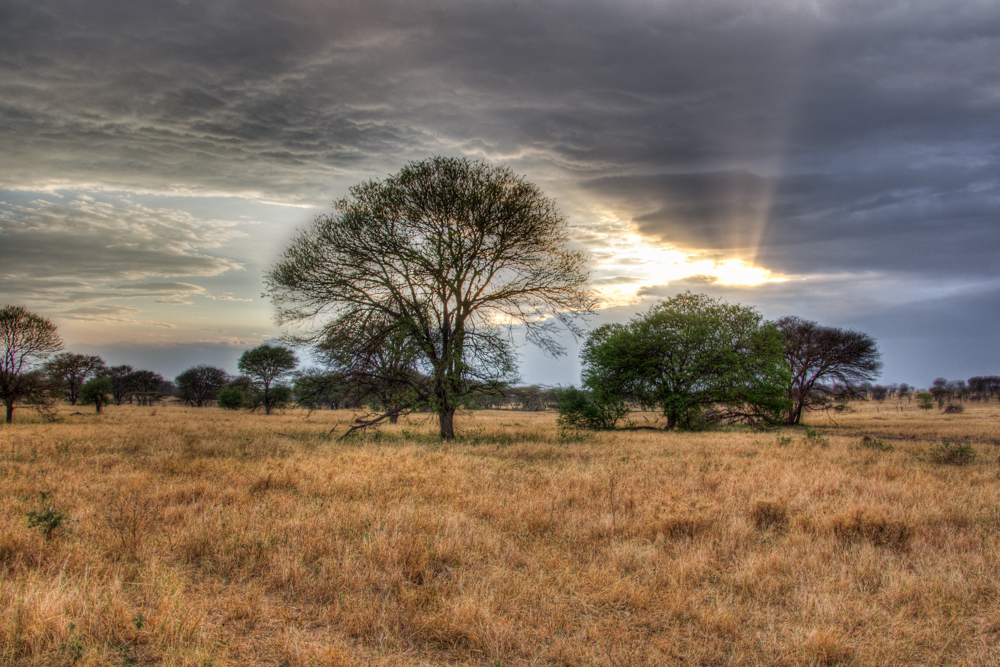 Africa-2013-1597-HDR