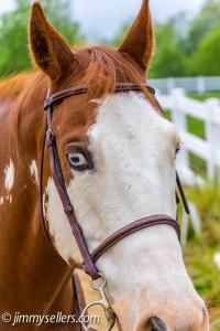 2014-05-21-Tanya-Blue-Horse-8