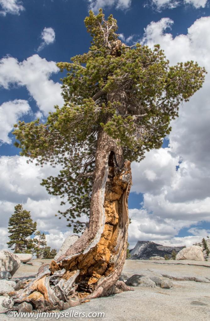 2014-09-Yosemite-534