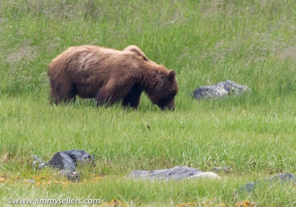 Alaska-2015-07-307