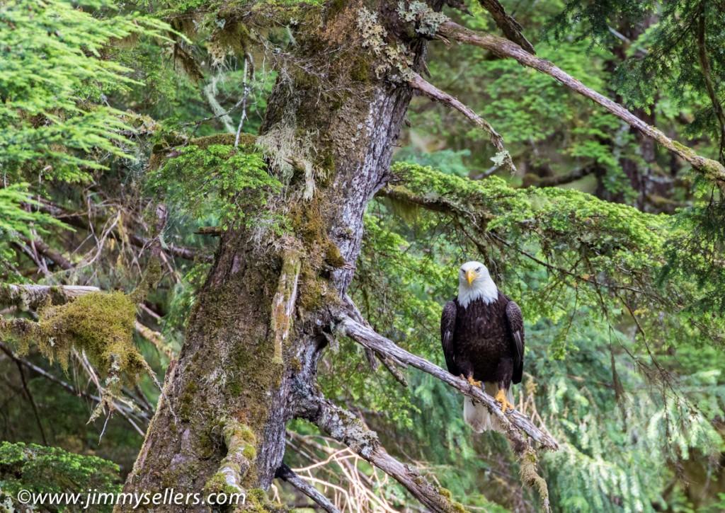 Alaska-2015-07-650