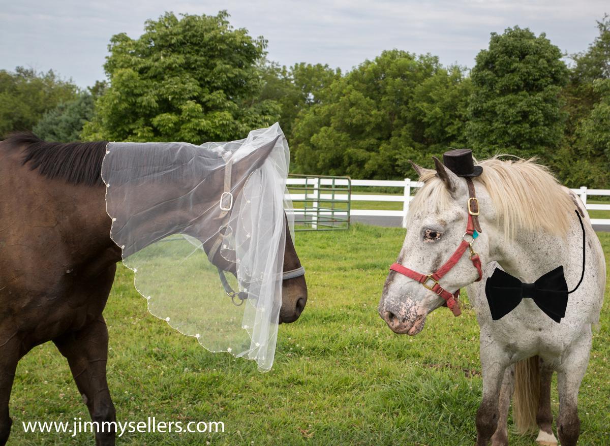 2015-08-09-wedding-horses-66-1