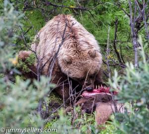 Alaska-2015-07-2844